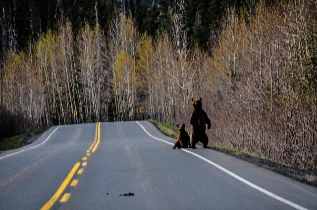 Sometimes we get hitchers on the road.  Photo - Ron Ledoux